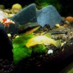 熱帯魚水槽のコケと藻の対策