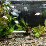 飼育する熱帯魚を決める