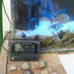 おすすめの水温計はマグテンプとマルチ水温計、安物では正確な表示がされないものも。