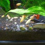 熱帯魚水槽に塩を入れる際の注意点